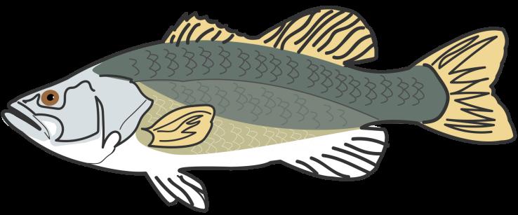pesce giusto